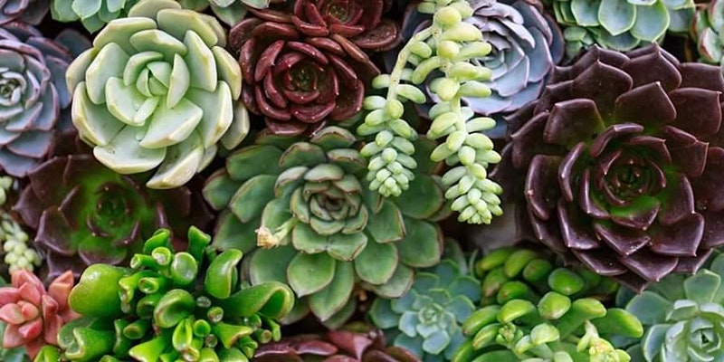 Succulent Planting with Mom!